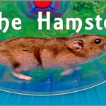 Coaching Model: The Hamster