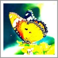 christina_tanaka_butterfly-200x200
