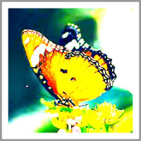 Coaching Model: The Butterfly