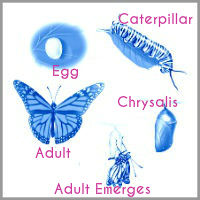 georgina_adams_coaching_model The Caterpillar Potential