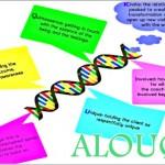 Coaching Model: ALOUQIK