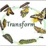 Coaching Model: Transform