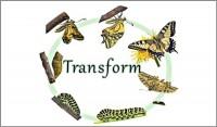 Coaching Model: Transform