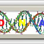 Coaching Model: DNA