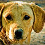 The Dog Ears Coach