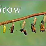 Coaching Model: iGrow