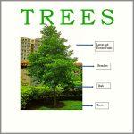 Coaching Model: TREES